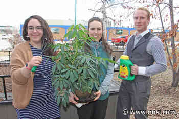 'Garden Morning' set for June 5 in Hay River - Northern News Services