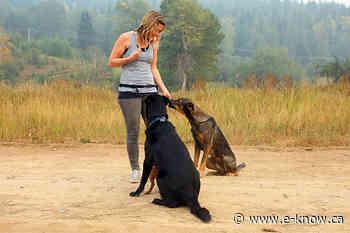 Fernie dog trainer recognized by BC SPCA   Elk Valley, Fernie - E-Know.ca