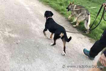 Hundehaufen häufen sich in Vlotho - Radio Herford