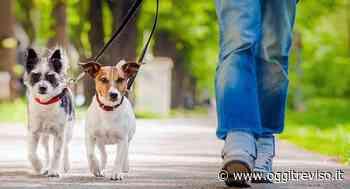 A Spresiano arrivano i dog sitter per chi è impossibilitato ad uscire da casa - Oggi Treviso