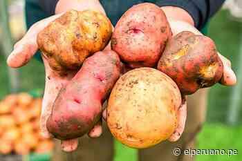 Más de 72 toneladas de Papa Yungay se venden en los mercados itinerantes del Midagri - El Peruano