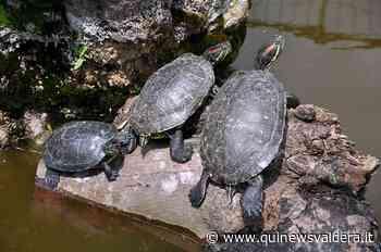 Il lago Il Cavo sarà liberato dalle tartarughe - Qui News Valdera