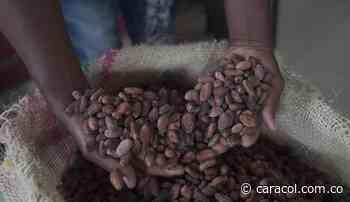 A Bogotá llego coco cultivado por ex combatientes en Tumaco - Caracol Radio