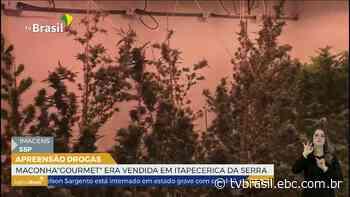 Maconha gourmet era vendida em Itapecerica da Serra   Repórter São Paulo   TV Brasil   Notícias - EBC
