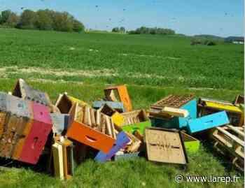 """Mathieu Noirot, l'apiculteur dont les ruches ont été saccagées à Courtenay : """"Je fais en sorte d'avancer"""" - Courtenay (45320) - La République du Centre"""
