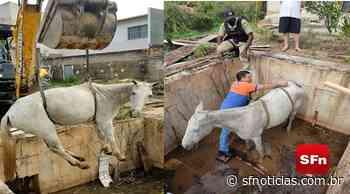 Retroescavadeira é usada para resgatar cavalo preso em Miracema; veja o vídeo - SF Notícias