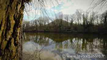 Corps retrouvé dans l'étang du bois des Hautois, à Oignies : l'enquête conclut à un suicide - La Voix du Nord