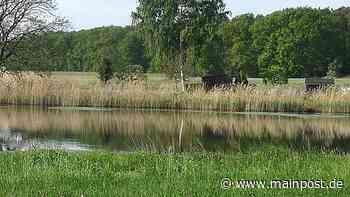 BN: Amphibienschutzanlage bei Volkach hat sich gelohnt - Main-Post
