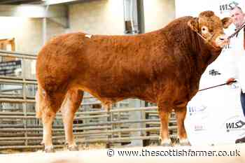 Dyfri and Dolcorsllwyn sell Limousin bulls to 8000gns at Welshpool - The Scottish Farmer