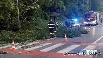 Incidente a San Mauro Torinese: albero cade e centra un'auto, conducente miracolosamente illeso - TorinoToday