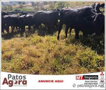 Polícia Civil recupera na zona rural de Lagoa Formosa gado furtado em Nova Ponte - Patos Agora