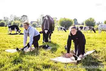 """Yoga op de weide tussen de koeien: """"Ze kwamen even snuffelen maar daarna was het genieten"""""""