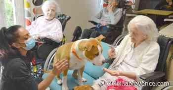 """Les Pennes-Mirabeau : """"Mes chiens sont dangereusement affectueux"""" - La Provence"""