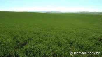 ND Agro deste domingo vai conhecer produtor de grãos de Campos Novos, em SC - ND Mais