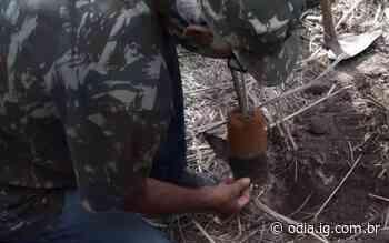 Silva Jardim realiza mutirão de reflorestamento no Parque da Biquinha - Jornal O Dia