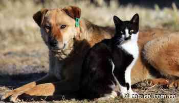 """Todos los perros y gatos de Chipaque ahora tendrán """"cédula"""" - Caracol Radio"""