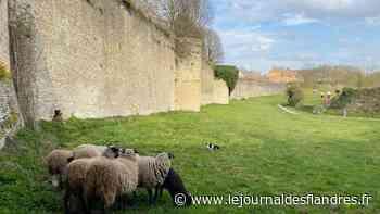 Loisirs : Une petite balade sophro, dans les remparts de Bergues, ça vous dit ? - Le Journal des Flandres