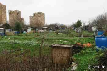 Seine-Saint-Denis. Les défenseurs des jardins ouvriers d'Aubervilliers y installent une ZAD - actu.fr