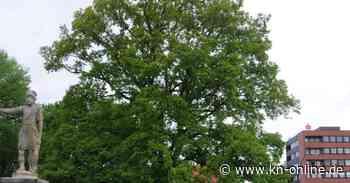 Wo stehen die Ersatzbäume aus Ablösezahlungen in Bad Bramstedt - Kieler Nachrichten
