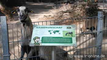 Freizeit in Elbe-Elster: Tierpark und Botanischer Garten in Herzberg sind ab sofort wieder offen - Lausitzer Rundschau