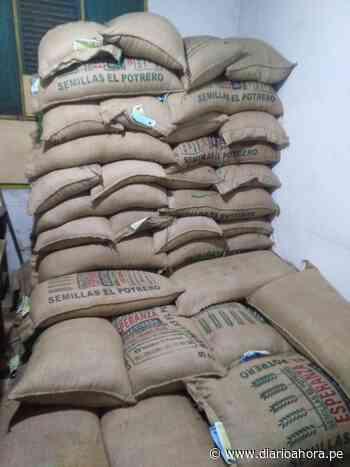 Contamana recibe 30 tons de semillas certificadas de arroz - DIARIO AHORA