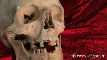 Égaré depuis 300 ans, le crâne en marbre signé du Bernin identifié à Dresde - Le Figaro