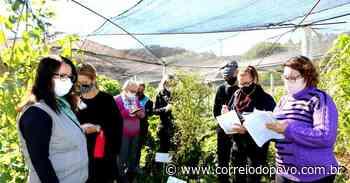 Sapiranga disponibiliza cursos gratuitos à população - Jornal Correio do Povo