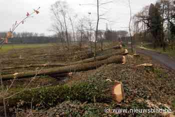 """In twee jaar tijd 27.000 vierkante meter aan bos gekapt: """"Als het zo verder gaat, is Waasmunster binnenkort geen groene parel meer"""" - Het Nieuwsblad"""