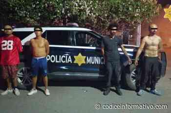 A punta de pistola, roban comercio en Arboledas; ya fueron detenidos - Códice Informativo