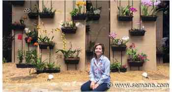 En Rionegro, Antioquia, florece una de las colecciones de orquídeas más grandes de Colombia - Semana