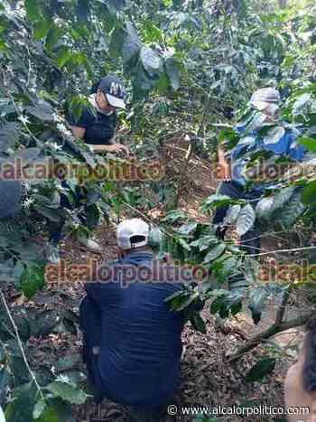 Hallaron a exagente de Tránsito de Cosamaloapan en fosa de Ixtac - alcalorpolitico