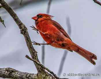 Danny Kingsbury welcomes the beauty of Spring through photos - StittsvilleCentral.ca