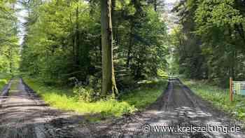 Erdmann-Radweg zwischen Bassum und Sulingen quer durch den Wald - kreiszeitung.de