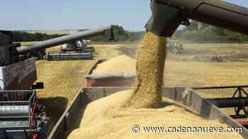 La Senadora Beccar Varela presentó un proyecto de declaración en el que expresa preocupación por las intervenciones en el mercado del trigo - Cadena Nueve