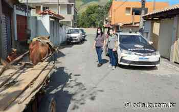 Homem é preso por maus-tratos a animal em Angra dos Reis - Jornal O Dia