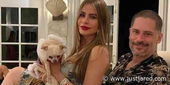 Sofia Vergara Reveals Dog Bubbles Is Very Possessive of Husband Joe Manganiello: 'She Hates Me' - Just Jared