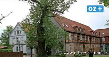 In Ribnitz-Damgarten werden die Bäume gecheckt - das sind die Gründe - Ostsee Zeitung