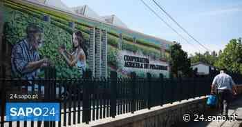 Cooperativa de Felgueiras distribui parte dos lucros por produtores e restaurantes - SAPO 24