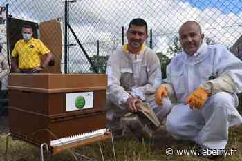 Apiculture urbaine : trois nouvelles ruches installées à Saint-Amand - Le Berry Républicain