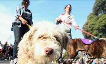 Puerto Madryn: La Municipalidad anunció que se reprograman las campañas de vacunación y castración de mascotas - Diario EL CHUBUT