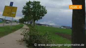 Baumschnitt trotz Brutzeit in Illertissen? Wieso die Schere jetzt angesetzt wurde - Augsburger Allgemeine