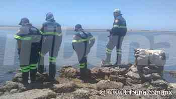 Huatabampo: Autoridades abandonan búsqueda de los pescadores de Moroncarit - TRIBUNA
