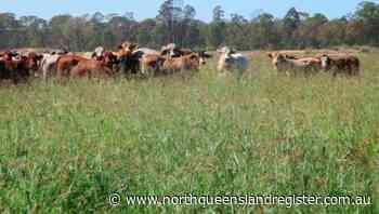 Chinchilla's Glencoe listed at $1.7 million - North Queensland Register
