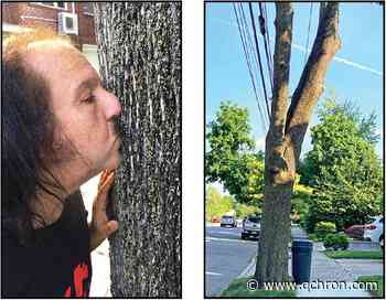 Ron Jeremy and his tree both stand trial - Queens Chronicle
