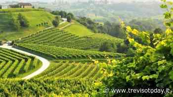 Conegliano Valdobbiadene: weekend in cantina - TrevisoToday