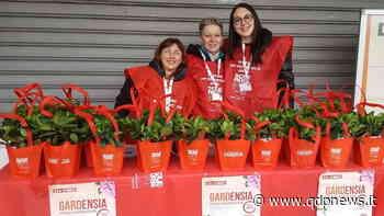 Valdobbiadene, Aism Treviso scende in piazza con le piante di Gardenia per la Giornata Mondiale della Sclerosi Multipla - Qdpnews