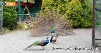 Der Vogelpark Abensberg ist verkauft - Region Kelheim - Nachrichten - Mittelbayerische