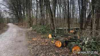 Schenefeld: Stadt will in Zukunft weniger Bäume fällen | shz.de - shz.de