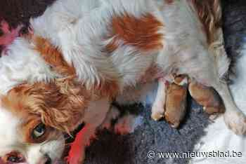 Dierenasiel overstelpt met steun voor de vijf achtergelaten pups aan tankstation