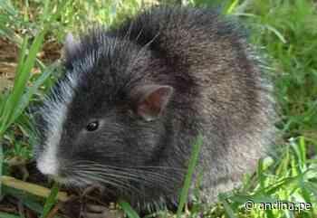 Machu Picchu: conoce las especies captadas por primera vez en el santuario histórico - Agencia Andina